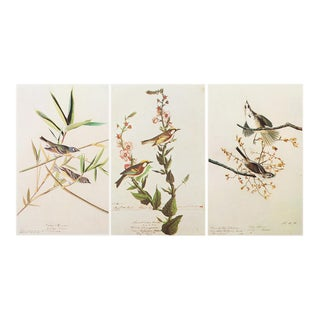 1960s Cottage Style Lithographs by John James Audubon - Set of 3