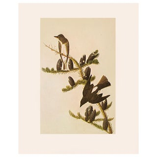 1960s Vintage Cottage Print of Olive-Sided Flycatcher by Audubon For Sale