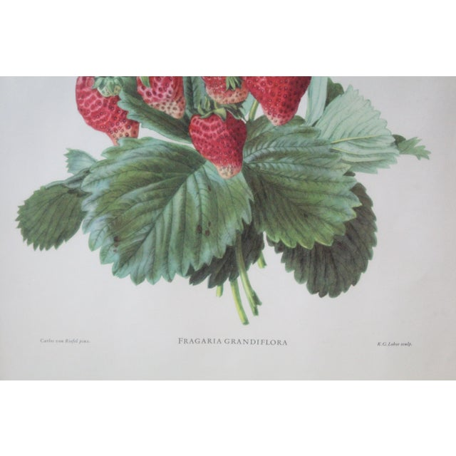 Country Silver Framed Strawberry Print For Sale - Image 3 of 7