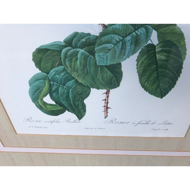 Pierre Joseph Redoute Botanical Rose Large Lithographs - a Pair For Sale In Philadelphia - Image 6 of 8