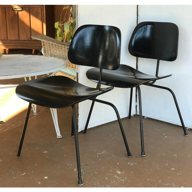 1950s Eames Ebony Plywood Dcm Side Chair - a Pair For Sale In San Antonio - Image 6 of 7