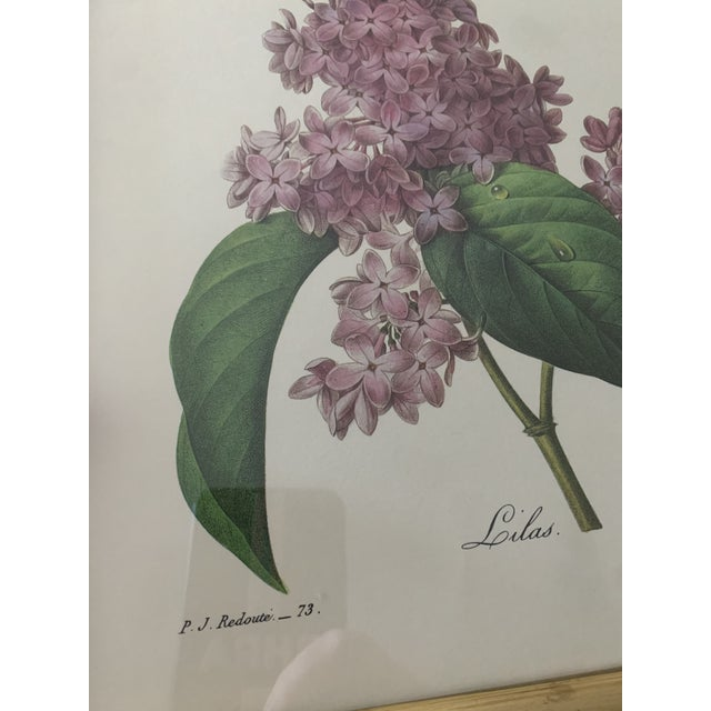 Reproduction Antique Botanical Print Lilac Framed For Sale - Image 11 of 12