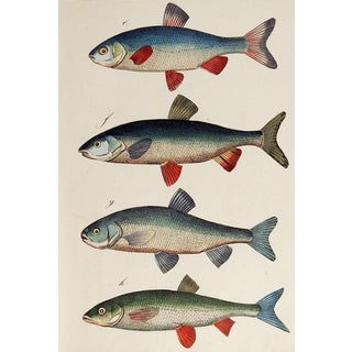 Hand Colored Fish Woodcut Print