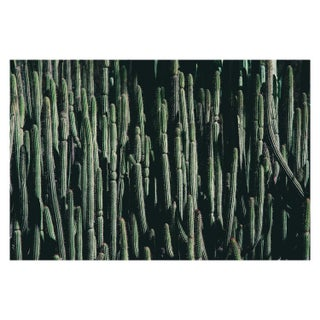 Large Cactus Photograph in Cool Tones Unframed For Sale