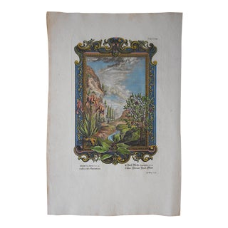 Antique Engraving, Landscape with Cassia & Iris For Sale