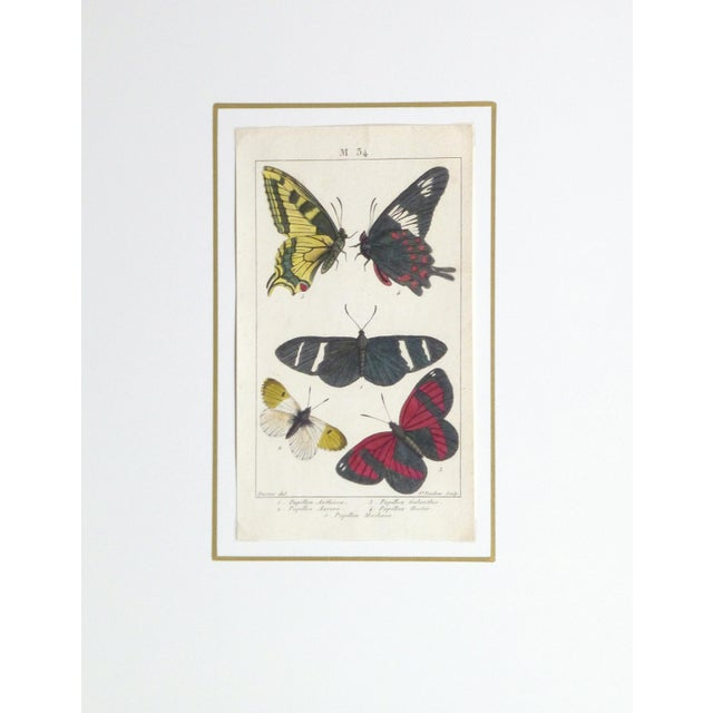 19th-Century Butterflies Engraving Print - Image 4 of 4