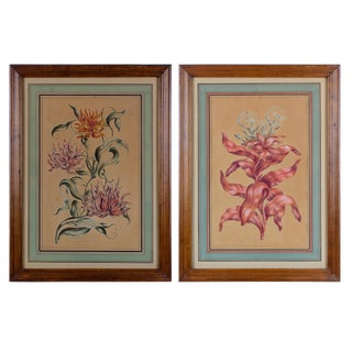 "John Hill Botanicals, London 1756 ""Imperial Gloriosa & Scarlet Costus"" Prints - a Pair For Sale"