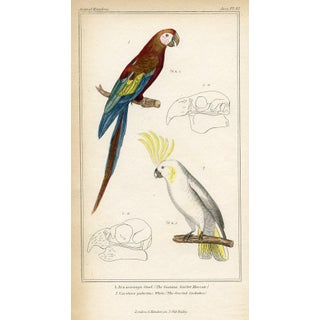 Maccaw and Cockatoo Print, 1834 For Sale