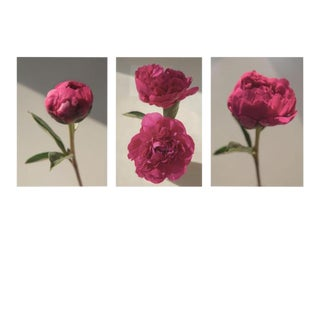 Hues: Berry Peony, 2020' Set of 3 Contemporary Photographs by Claiborne Swanson Frank, Large