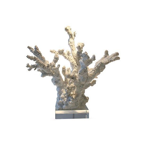 White Coral Sculpture With Lucite Base For Sale
