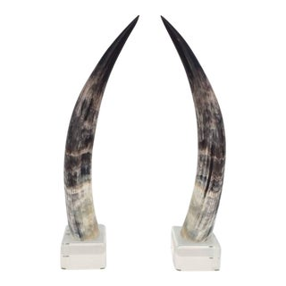 Mounted Steer Horns on Acrylic Bases - a Pair For Sale