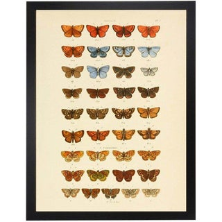 "Multi Butterflies Papilio Plate 3 - 30"" X 38"" For Sale"