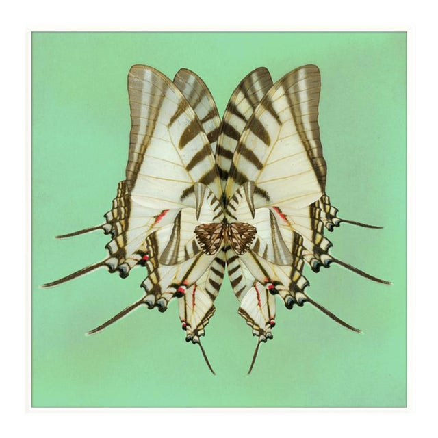 Morning Wings: Mint Art Print in White Lacquer Frame For Sale