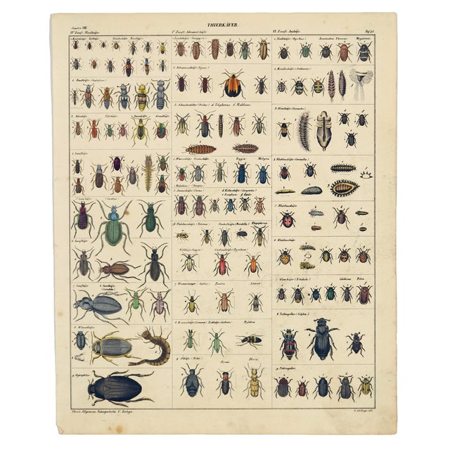 """Traditional """"Tierkaefer"""" (Animal Beetles), Hand-Colored Steel Engraving Circa 1850 For Sale - Image 3 of 3"""
