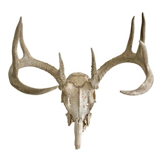 10 Pointed Naturally Weathered Skull Specimen For Sale