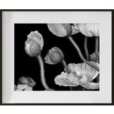 """Image of """"Poppies II"""", Contemporary Framed Photograph by Jean Karotkin For Sale"""