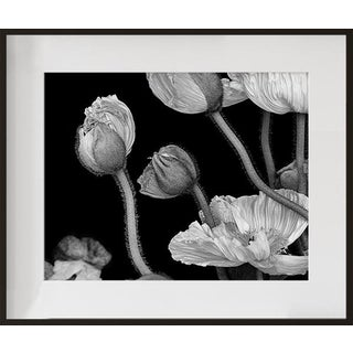 """Poppies II"", Contemporary Framed Photograph by Jean Karotkin For Sale"