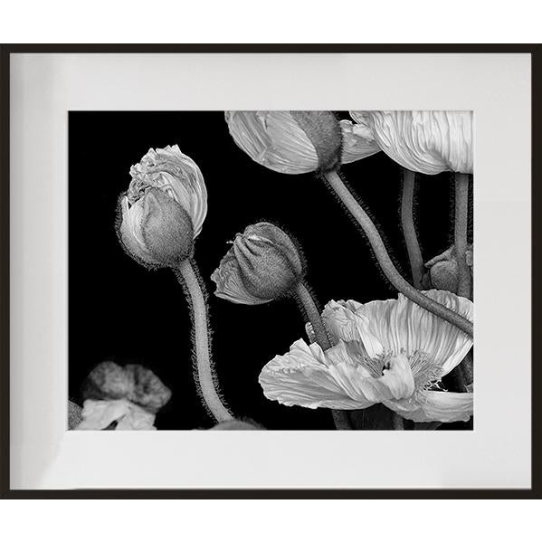 """""""Poppies II"""", Contemporary Framed Photograph by Jean Karotkin For Sale"""