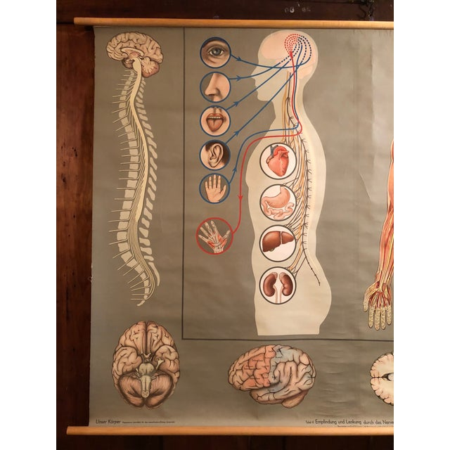 Denoyer-Geppert 1960s Vintage Hagemann for Denoyer-Geppert German Human Nervous System Pull-Down Chart For Sale - Image 4 of 10