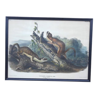Antique Audubon Lithograph-Hand Colored by Bowen-Imperial Folio Pl. 60-Male Weasels C.1845 For Sale