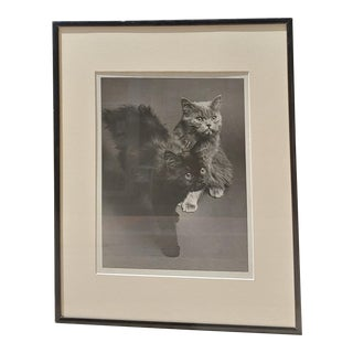 Vintage 1960s Persian Kittens Black & White Photograph For Sale