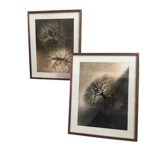Modern Abstract Organic Photographs by Ruth Asawa- A Pair For Sale