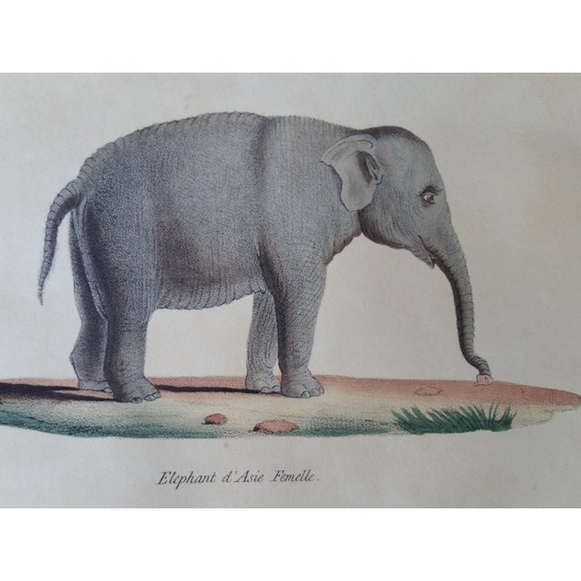 1829 Hand Painted Elephant Engravings - Image 3 of 6