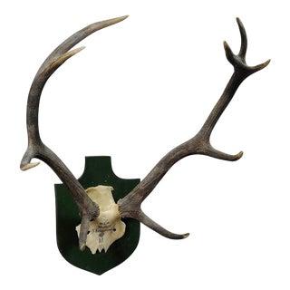 Black Forest Deer Trophy From Salem - Germany, Berstein 1957 For Sale