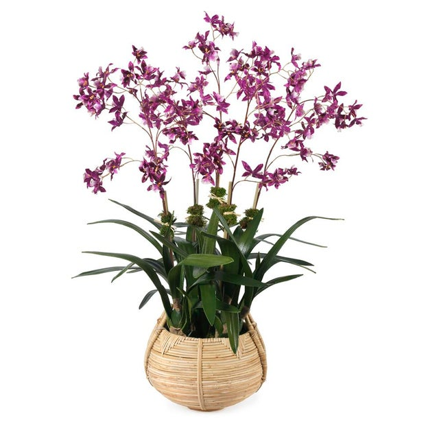 Boho Chic Diane James for Chairish Faux Dancing Orchid in Basket For Sale - Image 3 of 3