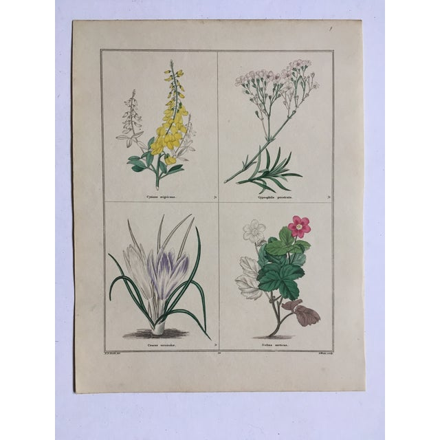 Yellow 1853 the Botanic Garden by Benjamin Maund Print For Sale - Image 8 of 8