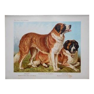 "Antique Dog Lithograph-""St. Bernard"" For Sale"