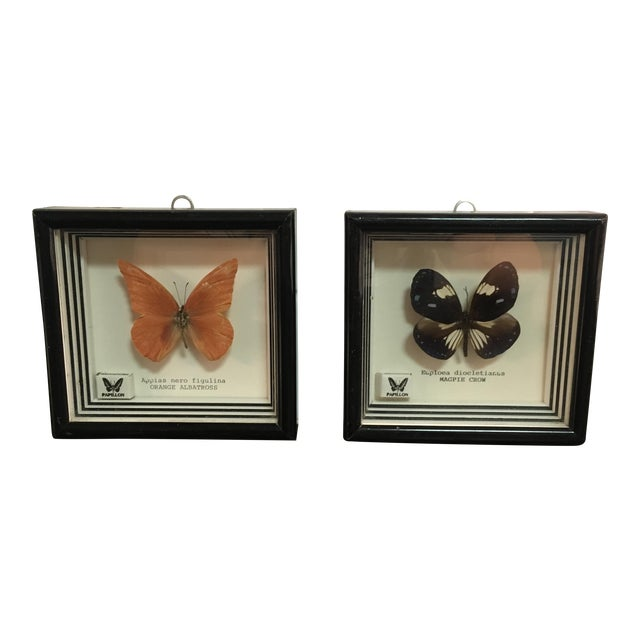 Framed Butterfly Specimens - Pair - Image 1 of 6
