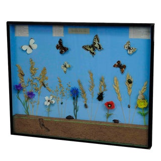 A Great Vintage School Teaching Display Of The Insects Of The Grassland For Sale