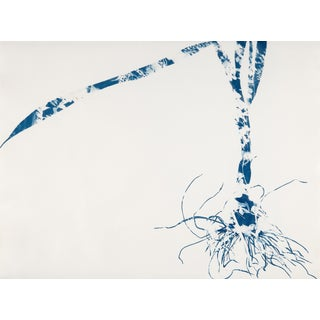 Cynthia MacCollum Waltz, Botanical Work on Paper, Cyanotype, Blue Monoprint 2019 For Sale