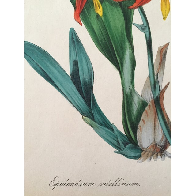 Late 19th Century Floral Botanical Color Print 19th Century For Sale - Image 5 of 5