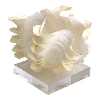 Organic Modern Natural Ruffled Clamshell on Lucite Base