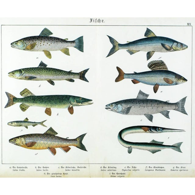 Late 19th Century Colorful Trio 1880 Schubert German Lithographs of Aquatic Life For Sale - Image 5 of 10