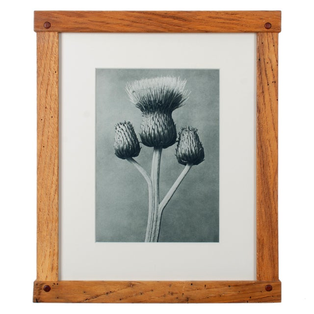 Karl Blossfeldt (Germany, 1865-1932) Offered is a set of five photogravures from Karl Blossfeldt's Art Forms In Nature,...