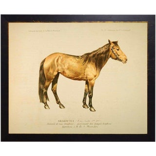 Whitney the Horse Bookplate 18x14 For Sale