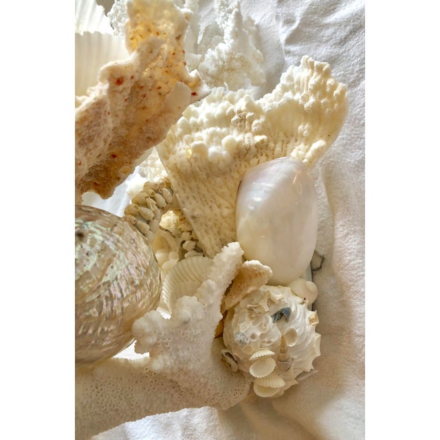 White Organic Modern Christa's South Seashells One-Light Coral Sconces - a Pair For Sale - Image 8 of 12