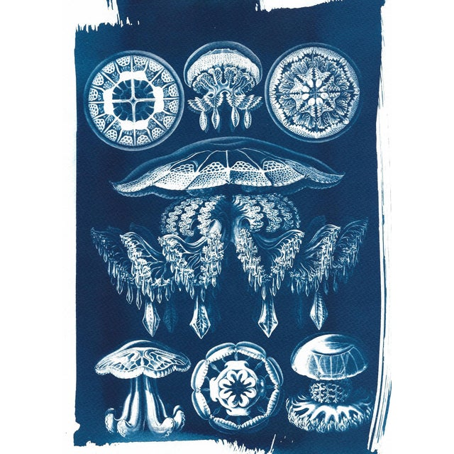 Jellyfish Anatomical Drawing by Ernst Haeckel, Cyanotype Print, A4 Size (Limited Edition) - Image 2 of 5