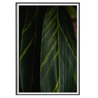 """Deep Green"" Unframed Photographic Print For Sale"