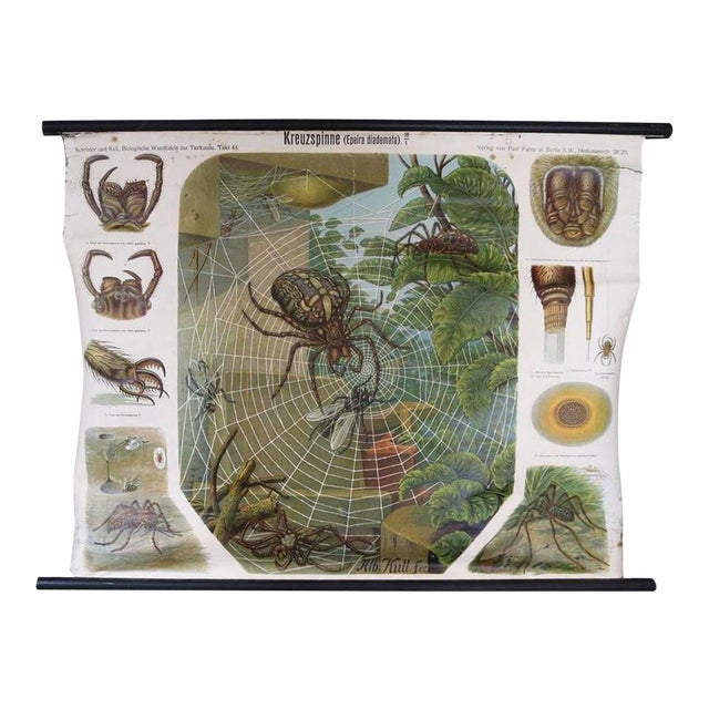 German Biology Chart of Spiders by Schroder Und Kull, 1910 For Sale