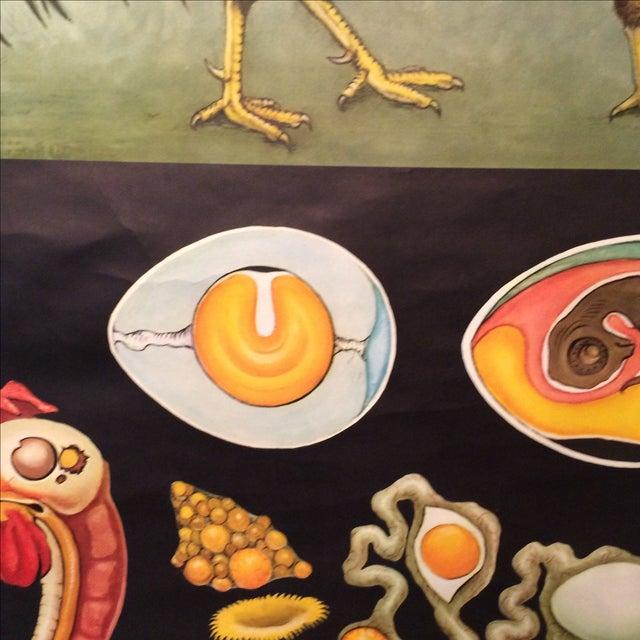 Jung-Koch-Quentell Chart Chicken - Image 8 of 11