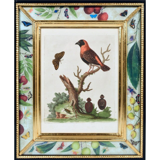 Mid 18th Century C. 1740 George Edwards Engravings of Birds - Set of 12 For Sale - Image 5 of 12
