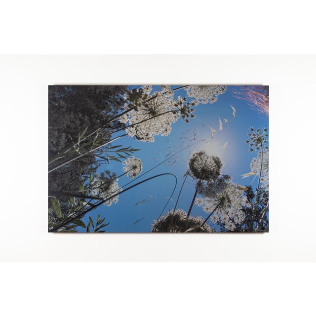 """Contemporary 2014 """"Weeds 3"""" Contemporary Landscape Photograph by Lekha Singh For Sale - Image 3 of 3"""