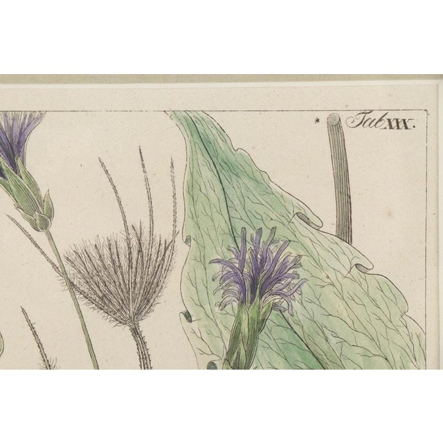 19th Century Hand-Colored Botanical Lithograph Pair For Sale In Los Angeles - Image 6 of 10