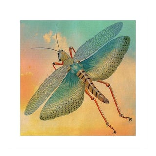 Antique 'Flying Grasshopper' Archival Print
