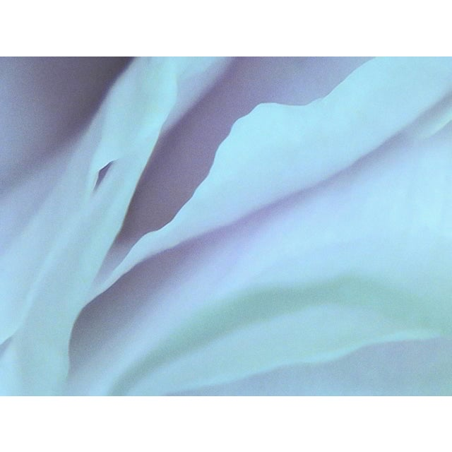 "Contemporary ""Petals 6"" Photography Print For Sale - Image 3 of 3"