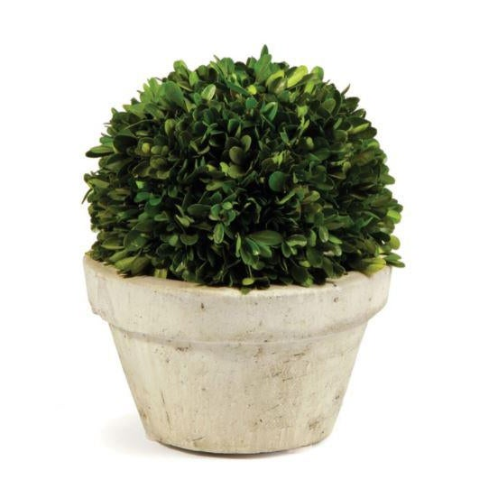 Traditional Kenneth Ludwig Chicago Boxwood Ball in Pot For Sale - Image 3 of 3